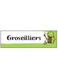 Étiquette Groseillier graine potager