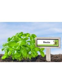 Étiquette Basilic graine potager